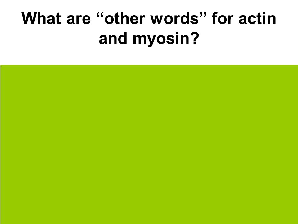 What are other words for actin and myosin Thick Filament = Actin Thin Filament = Myosin