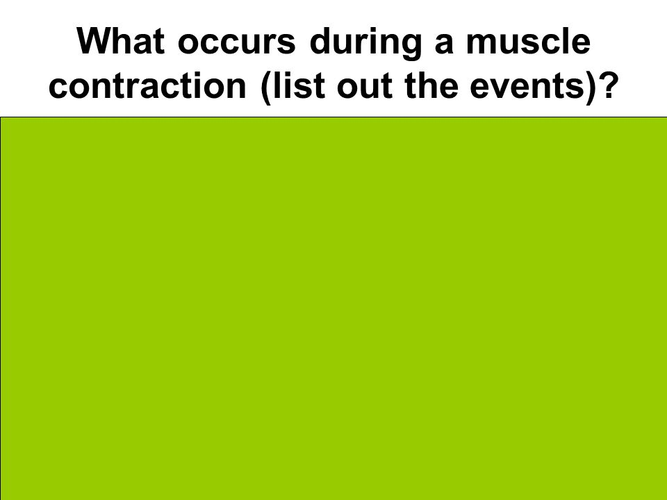 What occurs during a muscle contraction (list out the events).
