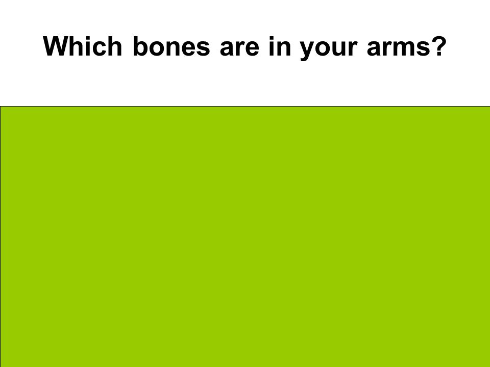 Which bones are in your arms Bicep Area = Humerus Forearm Area = Radius + Ulna