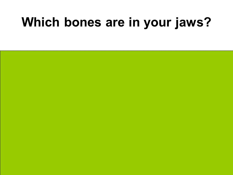 Which bones are in your jaws Upper = Maxilla Lower = Mandible