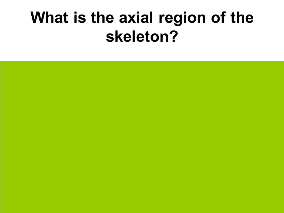 What is the axial region of the skeleton Very center Skull Vertebra Ribs Pelvis