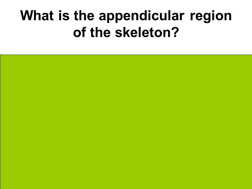 What is the appendicular region of the skeleton Off center Shoulders Hips Limbs