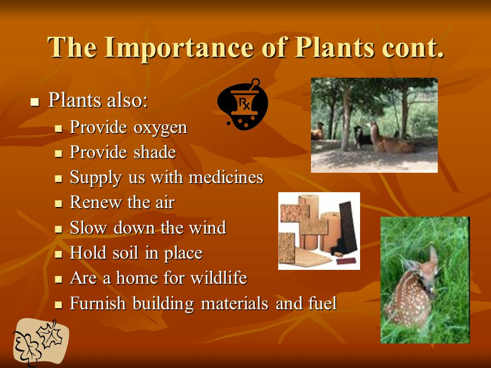 The Importance of Plants cont. Plants also: Plants also: Provide oxygen Provide oxygen Provide shade Provide shade Supply us with medicines Supply us
