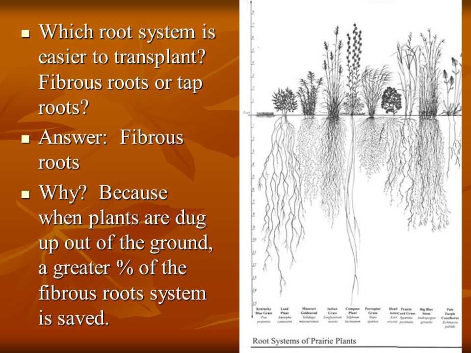 Which root system is easier to transplant.Fibrous roots or tap roots.