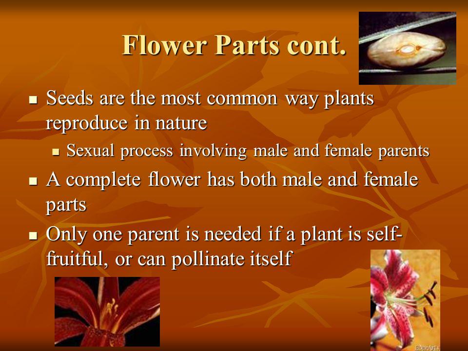 Flower Parts cont.