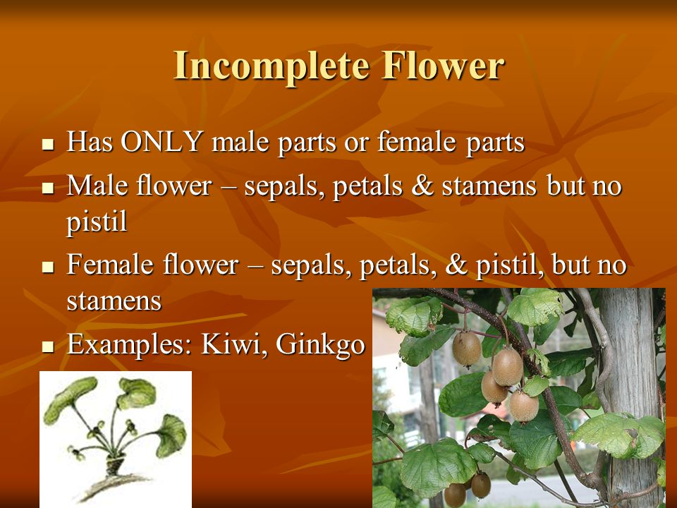 Incomplete Flower Has ONLY male parts or female parts Has ONLY male parts or female parts Male flower – sepals, petals & stamens but no pistil Male fl