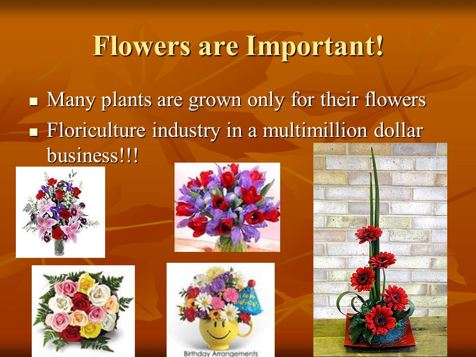 Flowers are Important! Many plants are grown only for their flowers Many plants are grown only for their flowers Floriculture industry in a multimilli
