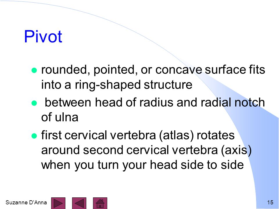 Suzanne D Anna15 Pivot l rounded, pointed, or concave surface fits into a ring-shaped structure l between head of radius and radial notch of ulna l first cervical vertebra (atlas) rotates around second cervical vertebra (axis) when you turn your head side to side