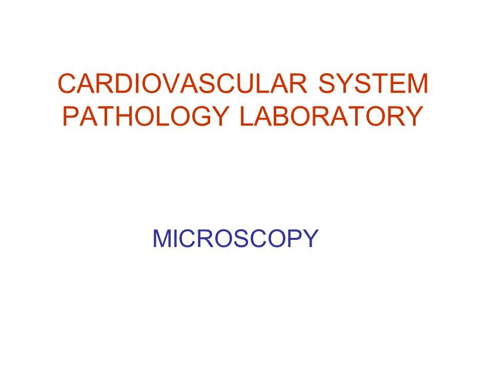 CARDIOVASCULAR SYSTEM PATHOLOGY LABORATORY MICROSCOPY