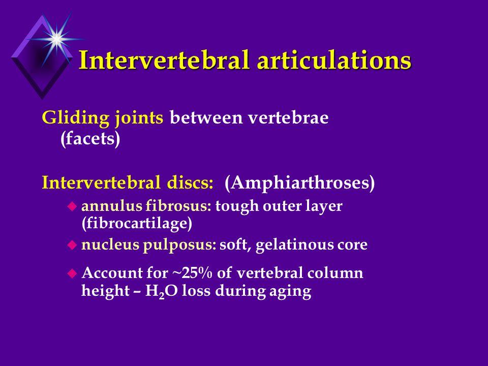 Intervertebral articulations Gliding joints between vertebrae (facets) Intervertebral discs: (Amphiarthroses)  annulus fibrosus: tough outer layer (fibrocartilage)  nucleus pulposus: soft, gelatinous core  Account for ~25% of vertebral column height – H 2 O loss during aging