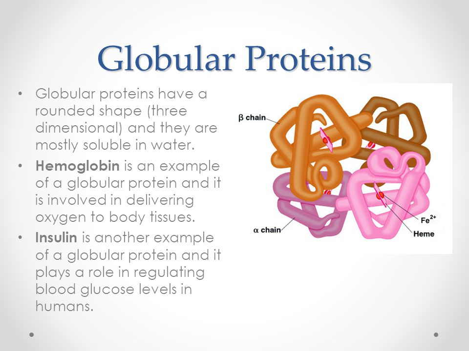 Globular Proteins Globular proteins have a rounded shape (three dimensional) and they are mostly soluble in water.