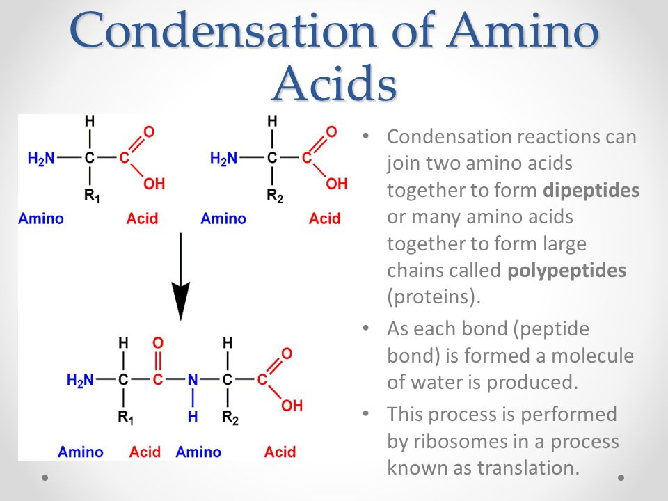 Condensation of Amino Acids Condensation reactions can join two amino acids together to form dipeptides or many amino acids together to form large chains called polypeptides (proteins).