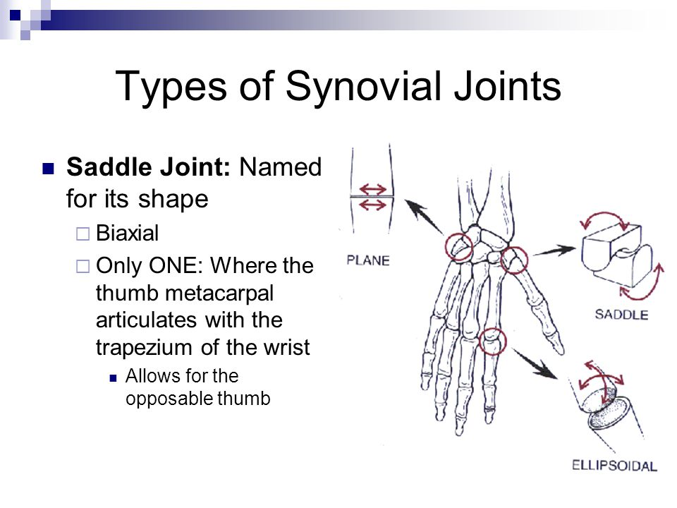 Types of Synovial Joints Saddle Joint: Named for its shape  Biaxial  Only ONE: Where the thumb metacarpal articulates with the trapezium of the wris