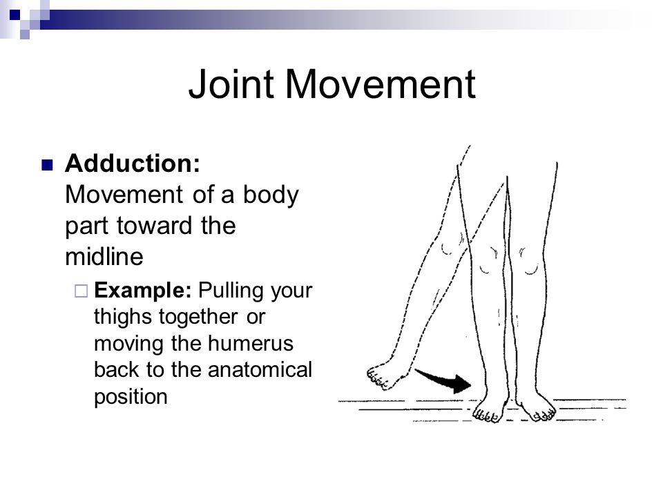 Joint Movement Adduction: Movement of a body part toward the midline  Example: Pulling your thighs together or moving the humerus back to the anatomi