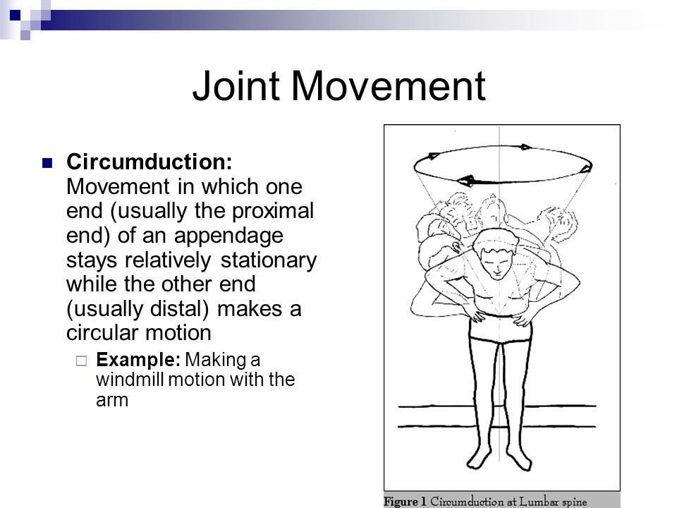 Joint Movement Circumduction: Movement in which one end (usually the proximal end) of an appendage stays relatively stationary while the other end (us