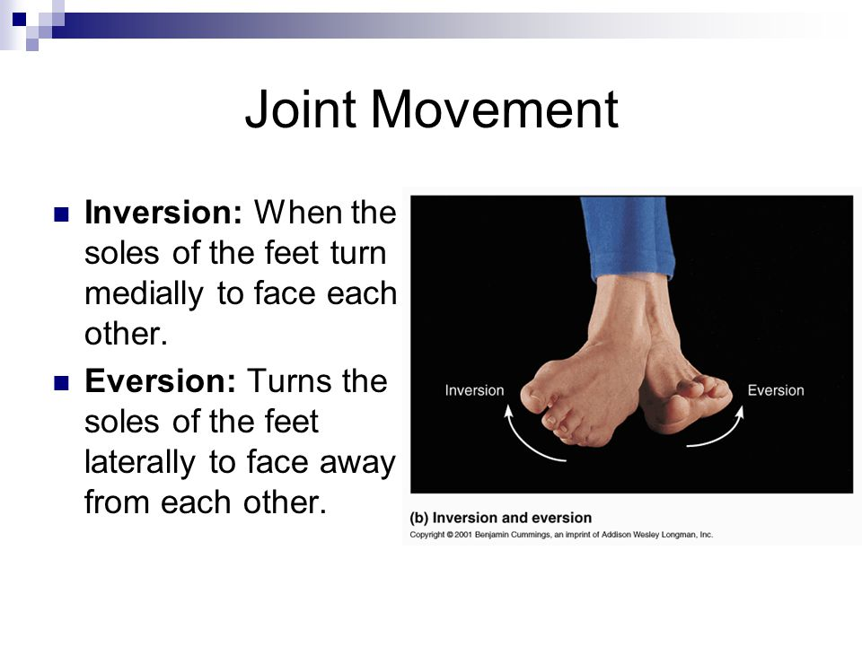 Joint Movement Inversion: When the soles of the feet turn medially to face each other. Eversion: Turns the soles of the feet laterally to face away fr