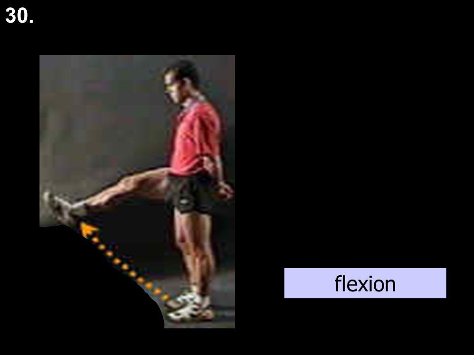 plantar flexion 31.