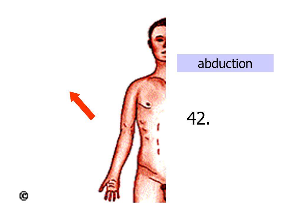 supination 43. Bones uncross