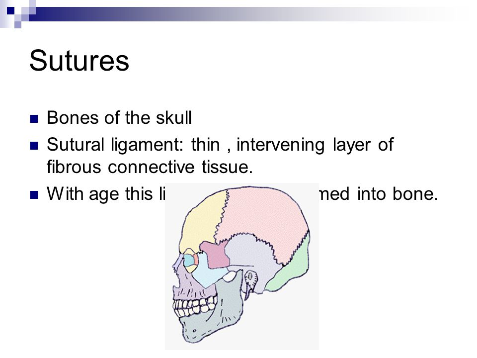 Sutures Bones of the skull Sutural ligament: thin, intervening layer of fibrous connective tissue.