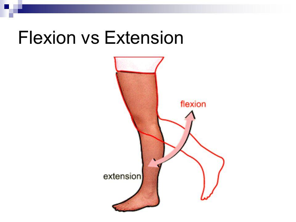 Flexion vs Extension