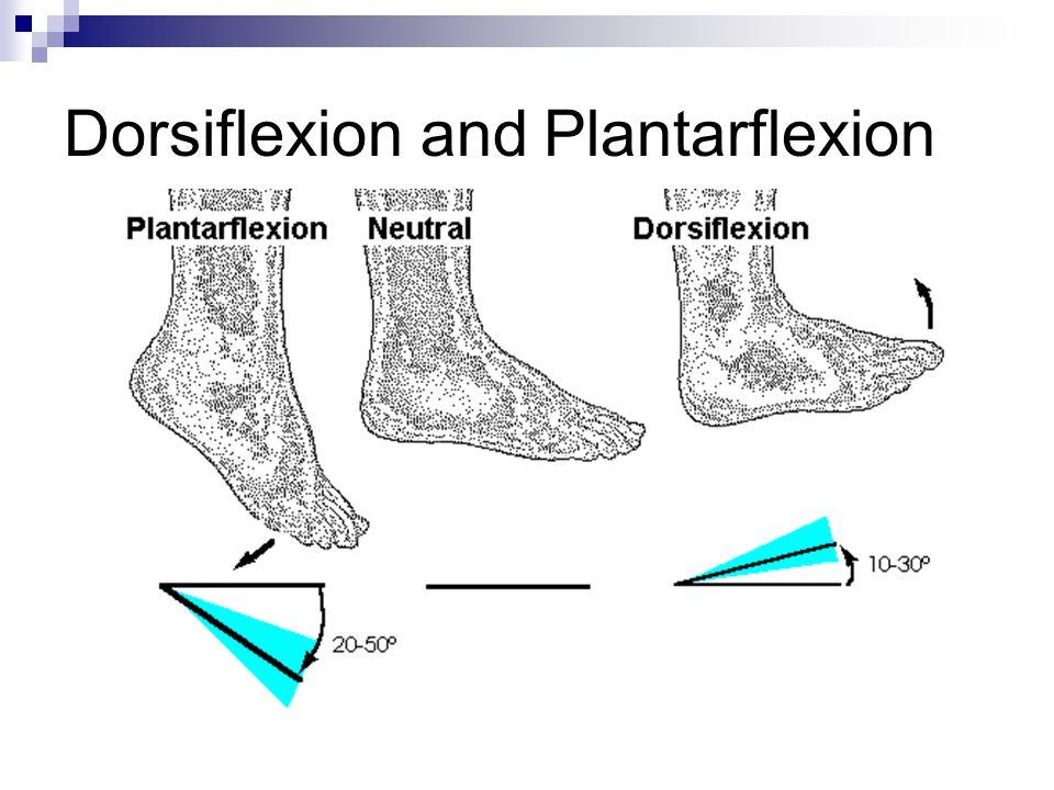 Dorsiflexion and Plantarflexion