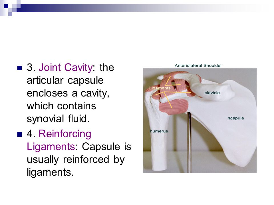 3. Joint Cavity: the articular capsule encloses a cavity, which contains synovial fluid.