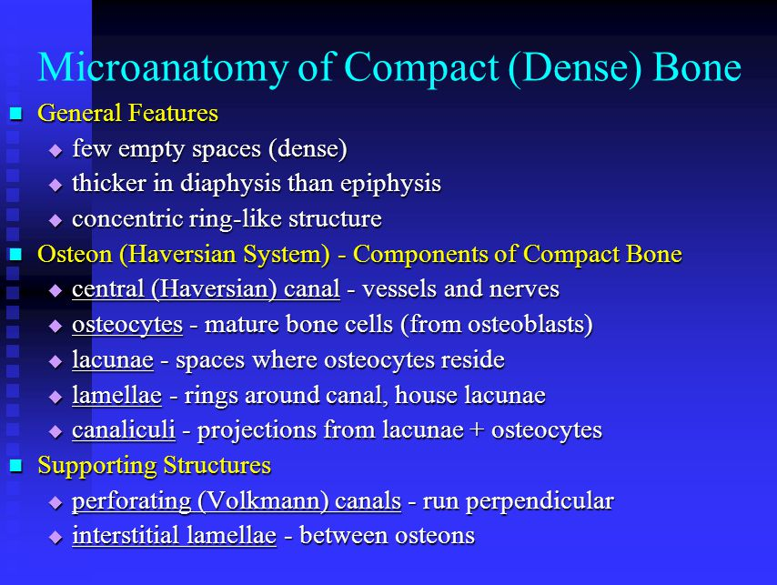 Microanatomy of Compact (Dense) Bone General Features General Features  few empty spaces (dense)  thicker in diaphysis than epiphysis  concentric r