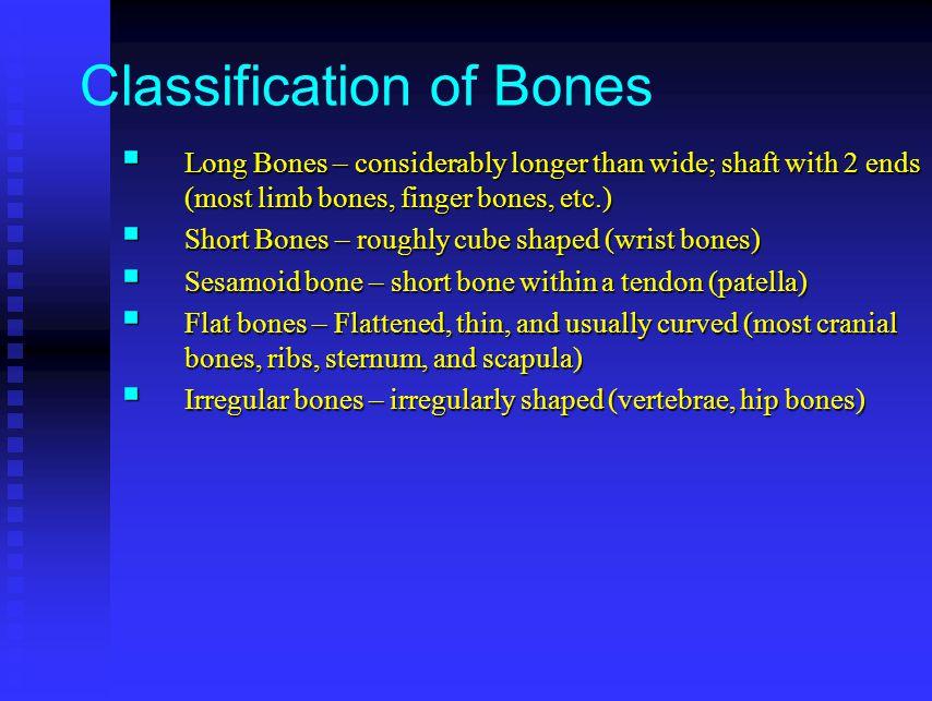 Classification of Bones  Long Bones – considerably longer than wide; shaft with 2 ends (most limb bones, finger bones, etc.)  Short Bones – roughly cube shaped (wrist bones)  Sesamoid bone – short bone within a tendon (patella)  Flat bones – Flattened, thin, and usually curved (most cranial bones, ribs, sternum, and scapula)  Irregular bones – irregularly shaped (vertebrae, hip bones)