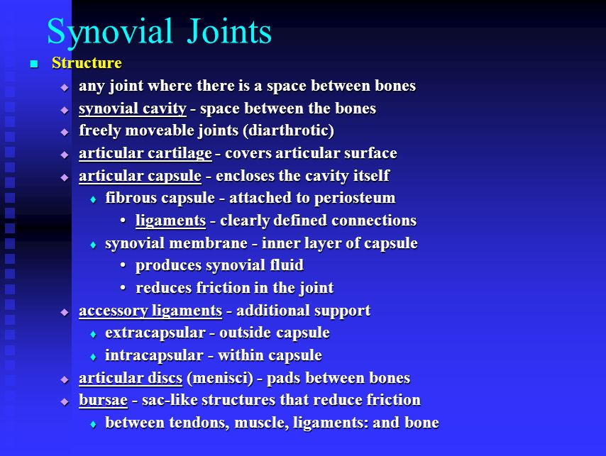 Synovial Joints Structure Structure  any joint where there is a space between bones  synovial cavity - space between the bones  freely moveable joints (diarthrotic)  articular cartilage - covers articular surface  articular capsule - encloses the cavity itself  fibrous capsule - attached to periosteum ligaments - clearly defined connectionsligaments - clearly defined connections  synovial membrane - inner layer of capsule produces synovial fluidproduces synovial fluid reduces friction in the jointreduces friction in the joint  accessory ligaments - additional support  extracapsular - outside capsule  intracapsular - within capsule  articular discs (menisci) - pads between bones  bursae - sac-like structures that reduce friction  between tendons, muscle, ligaments: and bone