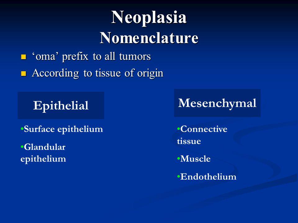 Neoplasia Nomenclature 'oma' prefix to all tumors 'oma' prefix to all tumors According to tissue of origin According to tissue of origin Epithelial Me