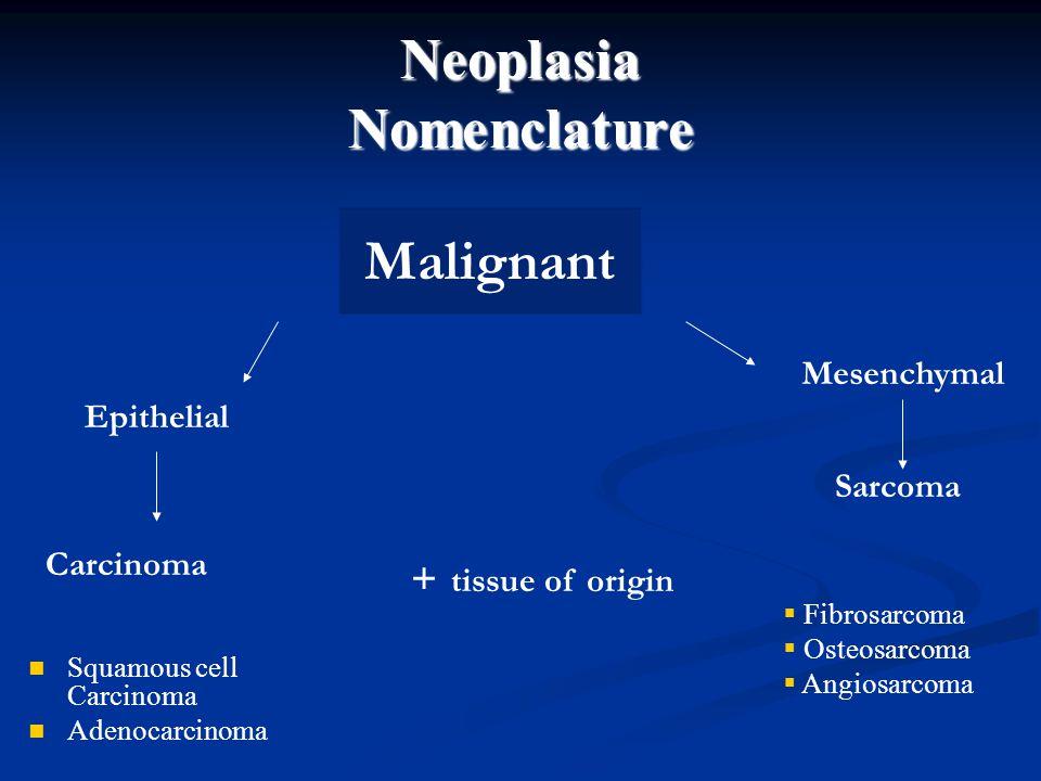 Neoplasia Nomenclature Malignant Epithelial Mesenchymal Carcinoma Sarcoma + tissue of origin Squamous cell Carcinoma Adenocarcinoma  Fibrosarcoma  O