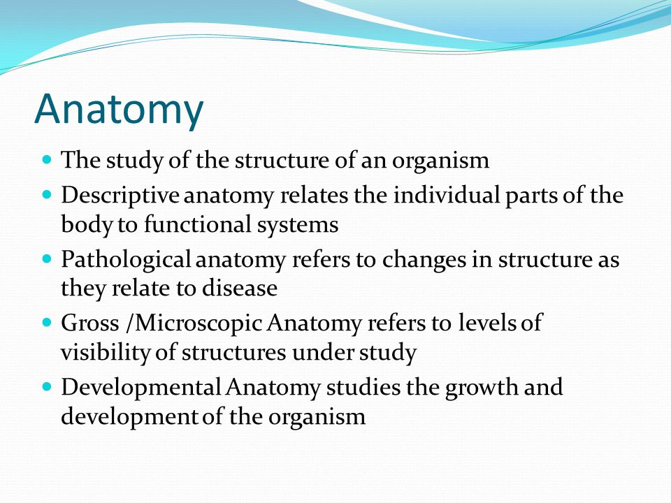 Anatomy The study of the structure of an organism Descriptive anatomy relates the individual parts of the body to functional systems Pathological anatomy refers to changes in structure as they relate to disease Gross /Microscopic Anatomy refers to levels of visibility of structures under study Developmental Anatomy studies the growth and development of the organism