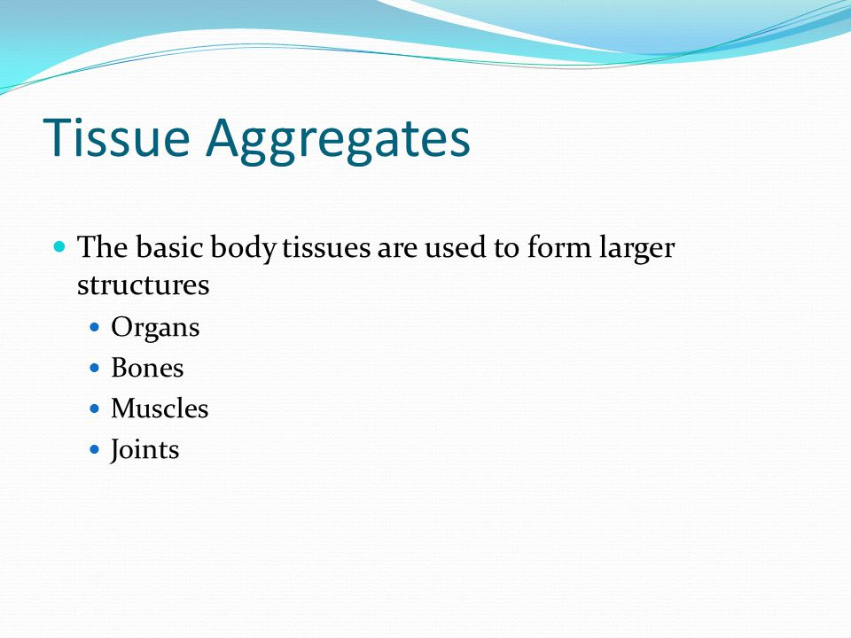 Tissue Aggregates The basic body tissues are used to form larger structures Organs Bones Muscles Joints