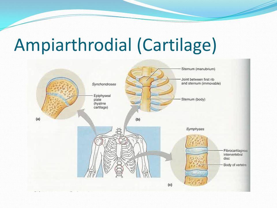 Ampiarthrodial (Cartilage)