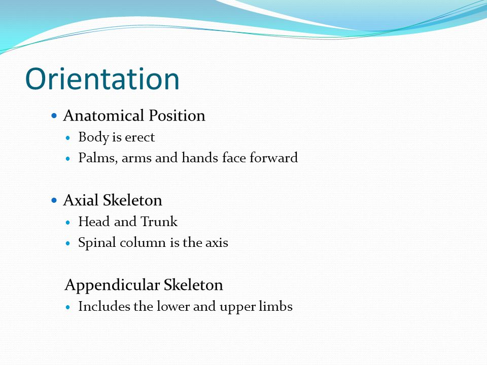 Orientation Anatomical Position Body is erect Palms, arms and hands face forward Axial Skeleton Head and Trunk Spinal column is the axis Appendicular Skeleton Includes the lower and upper limbs