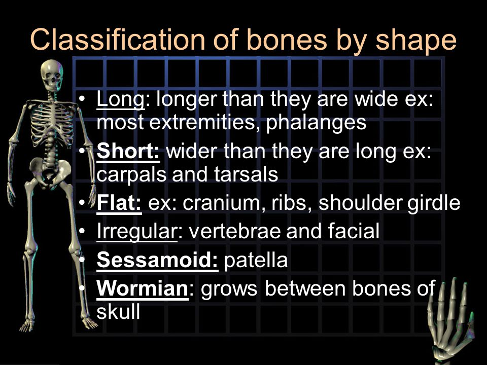 Classification of bones by shape Long: longer than they are wide ex: most extremities, phalanges Short: wider than they are long ex: carpals and tarsa