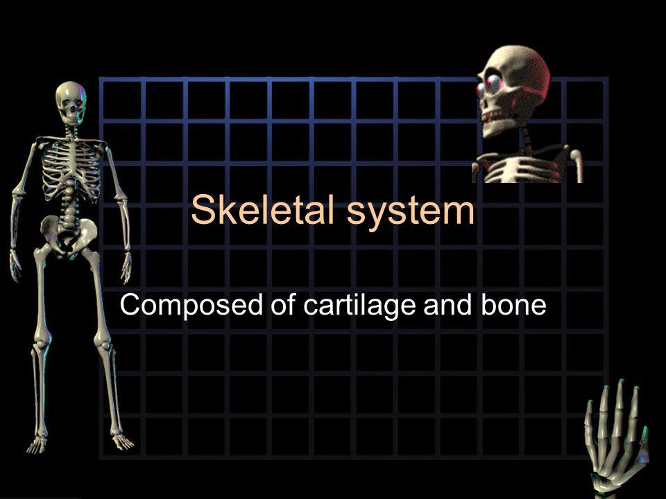 Skeletal system Composed of cartilage and bone