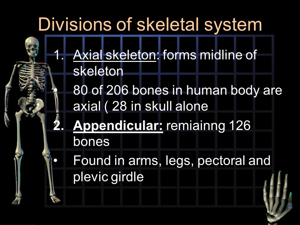 Divisions of skeletal system 1.Axial skeleton: forms midline of skeleton 80 of 206 bones in human body are axial ( 28 in skull alone 2.Appendicular: r