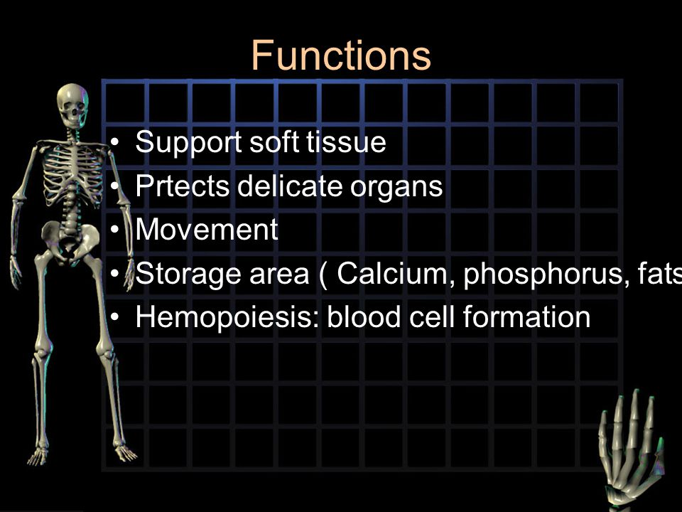 Functions Support soft tissue Prtects delicate organs Movement Storage area ( Calcium, phosphorus, fats Hemopoiesis: blood cell formation