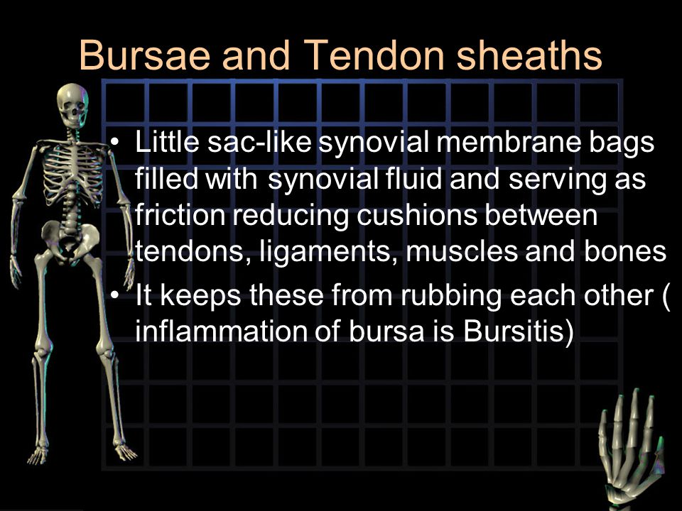 Bursae and Tendon sheaths Little sac-like synovial membrane bags filled with synovial fluid and serving as friction reducing cushions between tendons,