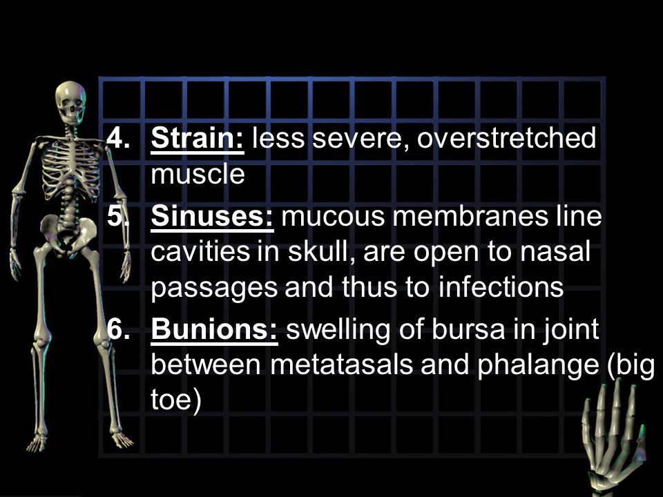 4.Strain: less severe, overstretched muscle 5.Sinuses: mucous membranes line cavities in skull, are open to nasal passages and thus to infections 6.Bu