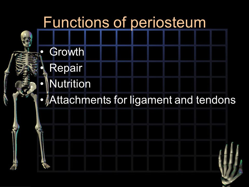 Functions of periosteum Growth Repair Nutrition Attachments for ligament and tendons
