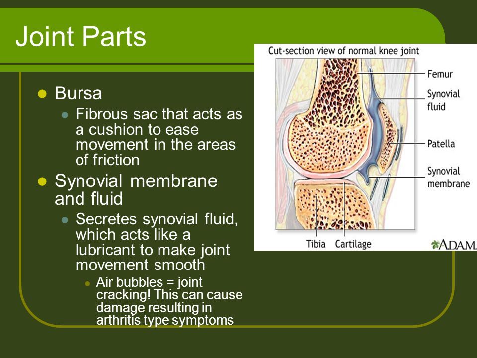 Joint Parts Bursa Fibrous sac that acts as a cushion to ease movement in the areas of friction Synovial membrane and fluid Secretes synovial fluid, wh