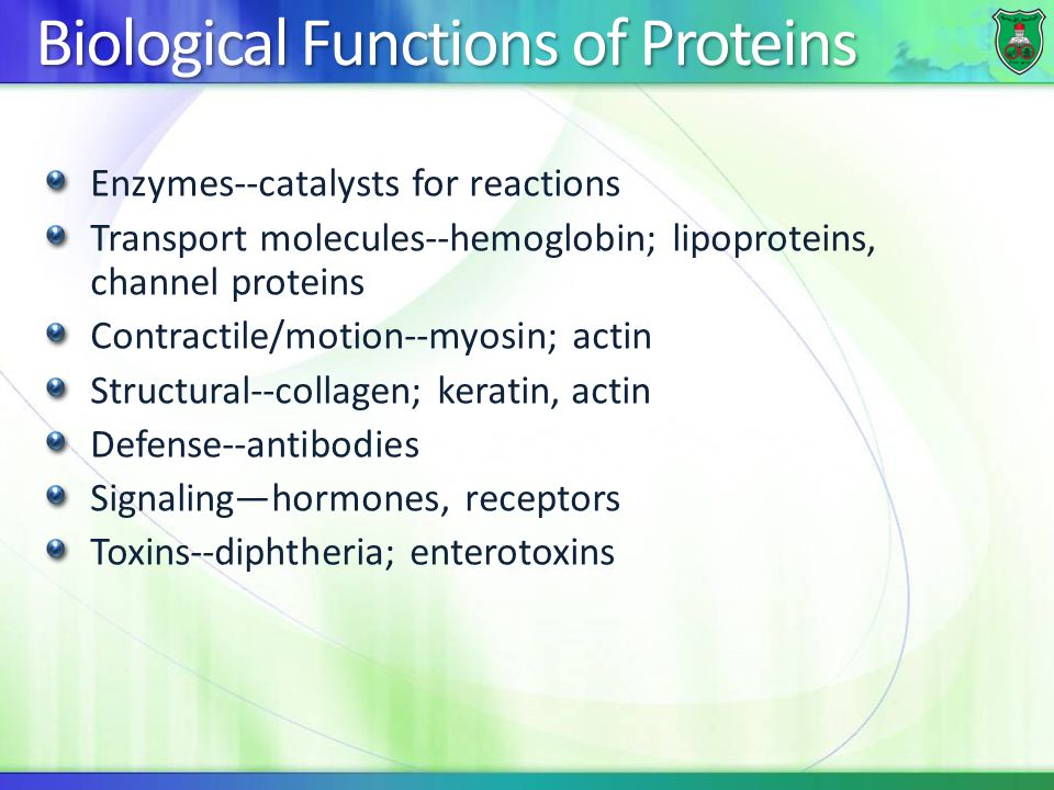 Biological Functions of Proteins Enzymes--catalysts for reactions Transport molecules--hemoglobin; lipoproteins, channel proteins Contractile/motion--