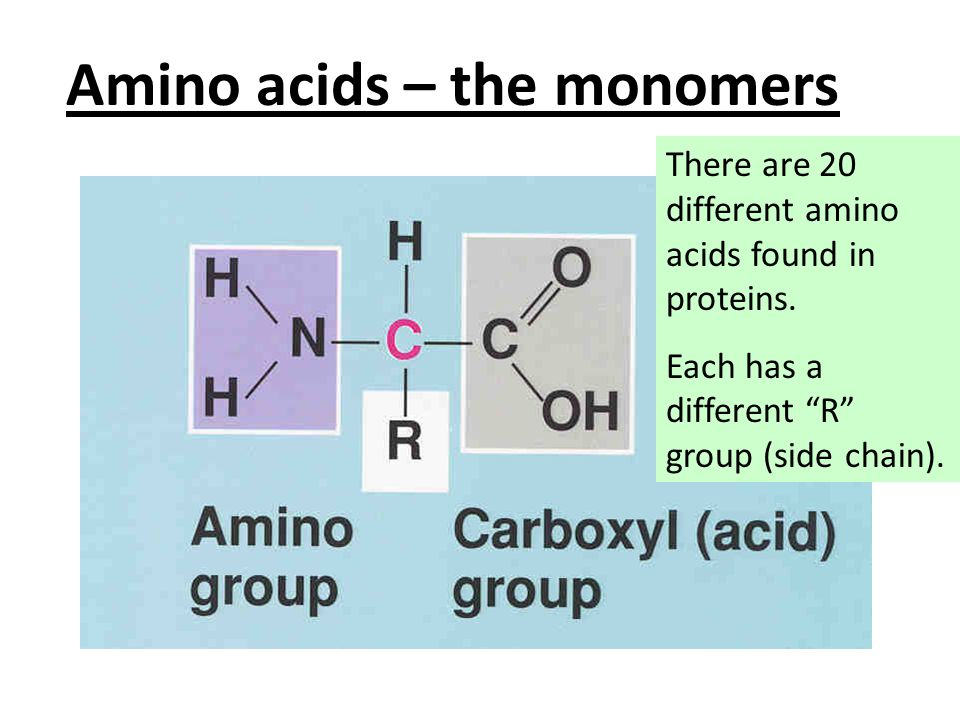 Amino acids – the monomers There are 20 different amino acids found in proteins.