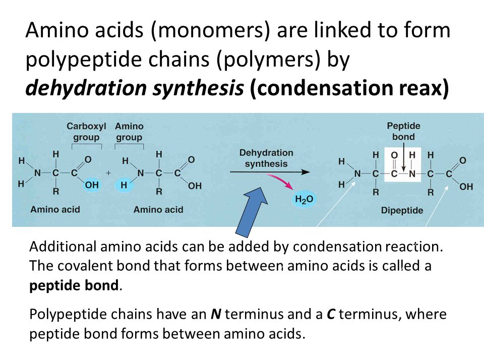 A functional proteins consists of one or more polypeptides that have been precisely twisted, folded, and coiled into a unique shape.