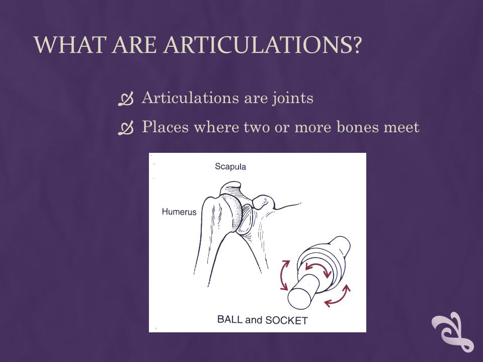 WHAT ARE ARTICULATIONS  Articulations are joints  Places where two or more bones meet
