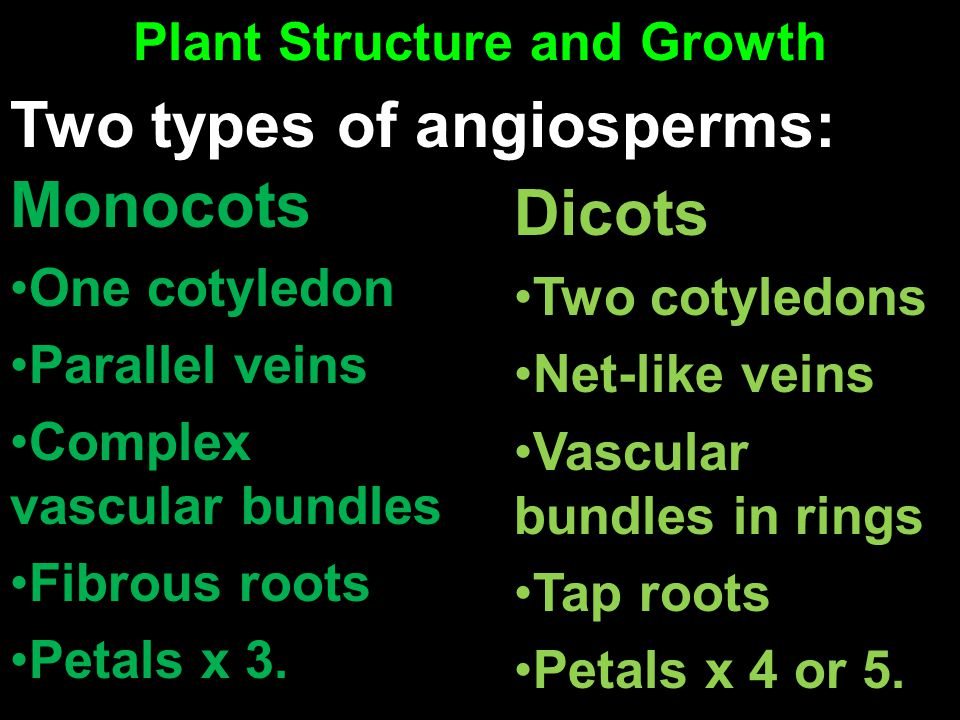 Plant Structure and Growth Monocots One cotyledon Parallel veins Complex vascular bundles Fibrous roots Petals x 3. Dicots Two cotyledons Net-like vei