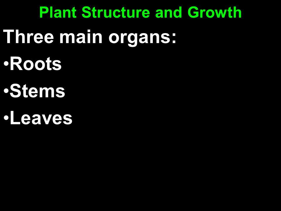 Three main organs: Roots Stems Leaves