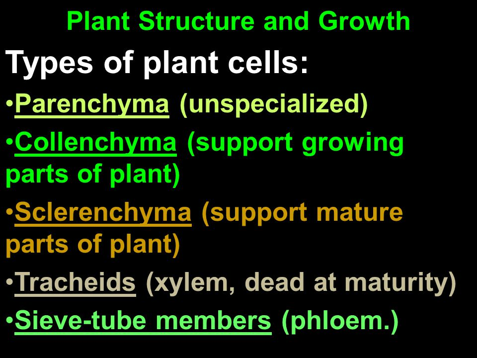 Plant Structure and Growth Types of plant cells: Parenchyma (unspecialized) Collenchyma (support growing parts of plant) Sclerenchyma (support mature